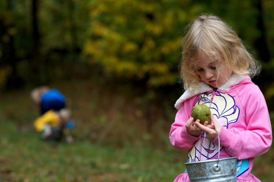 young girl examines walnut while acorn picking