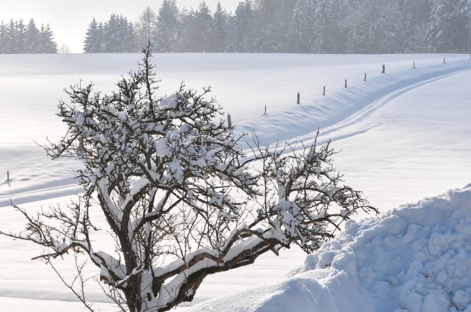 Ebenthal_Radsberg_Winterlandschaft_13022010_1634